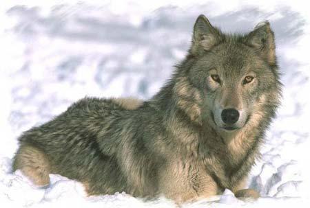 Postea lo que el de arriba quiere Wolf3
